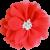 fleurs pistils corail