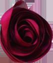 bouton rose cerise