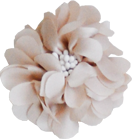 Fleurs beige pistils