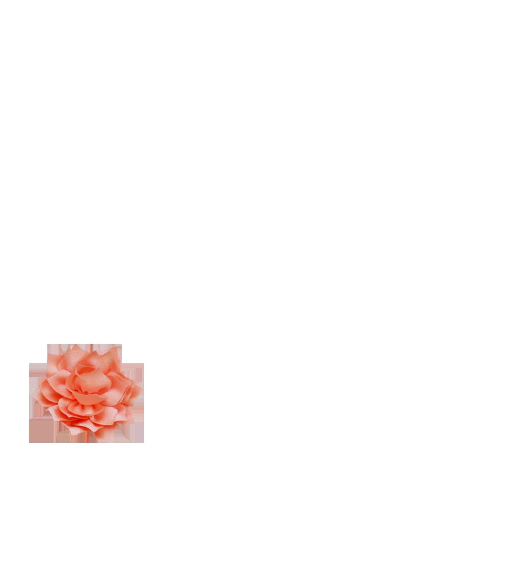 lotus corail