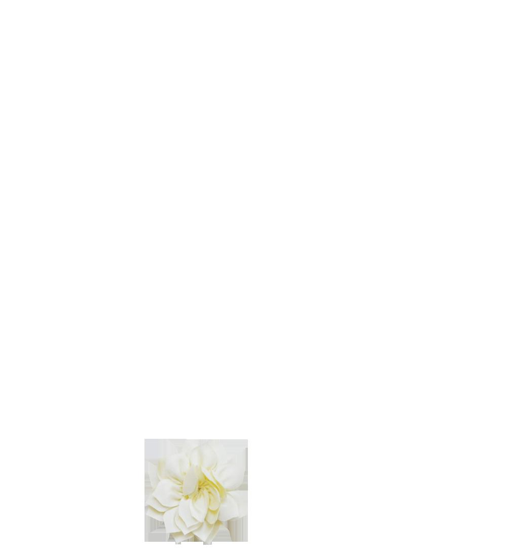 lotus vanille
