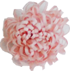 Fleur pompon rose poudrée