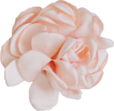 fleur rose poudré