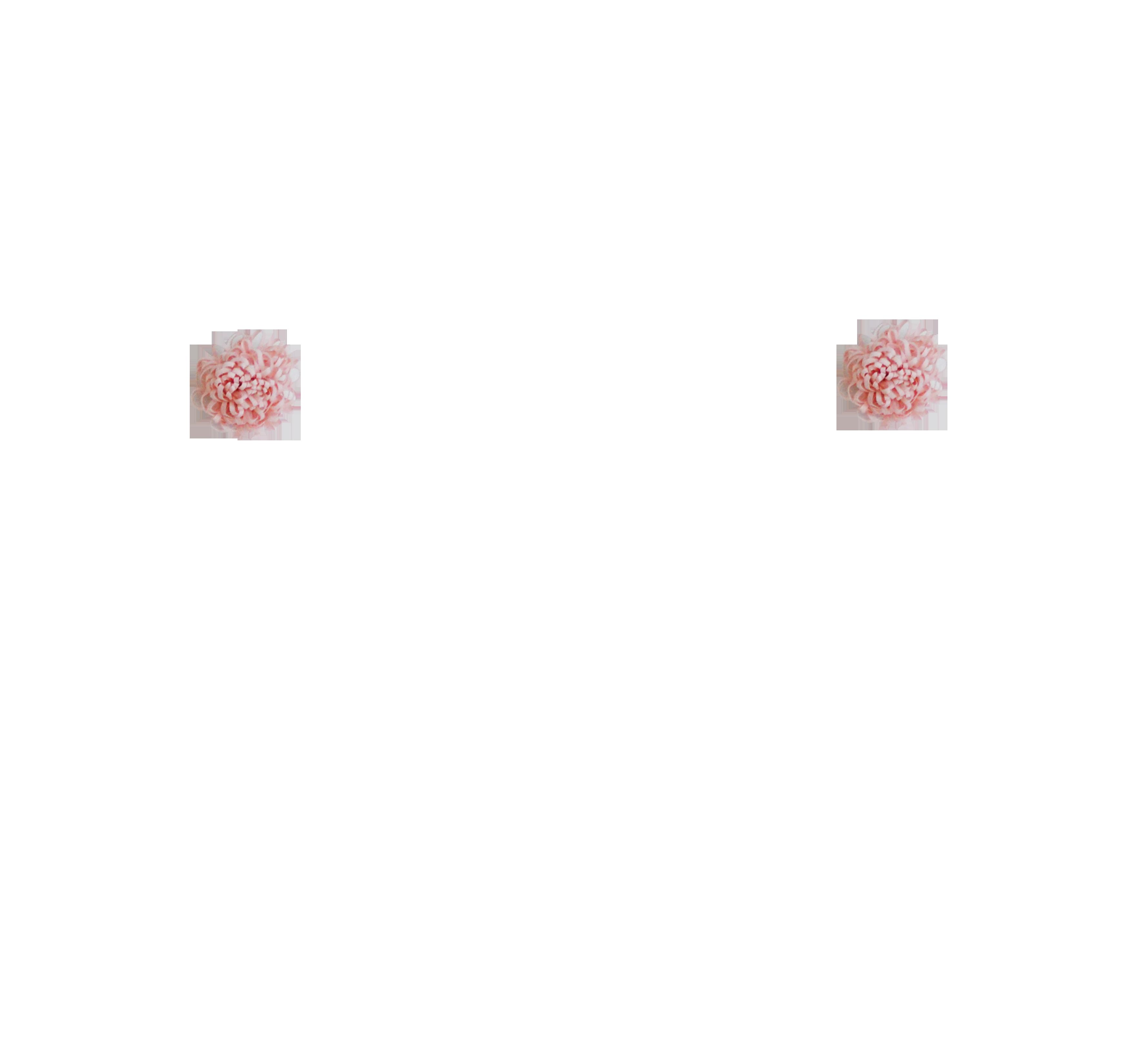 pomponrose