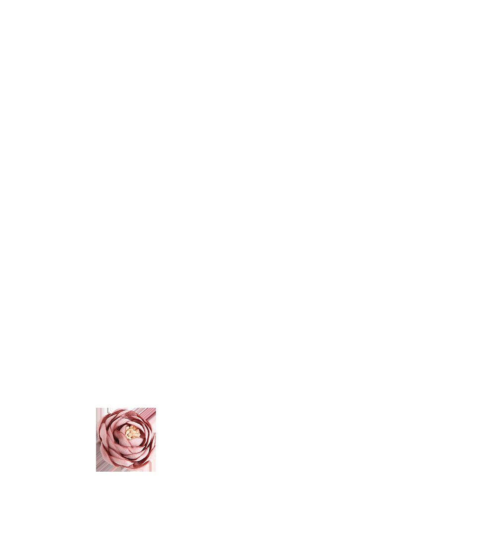 renoncule vieux rose