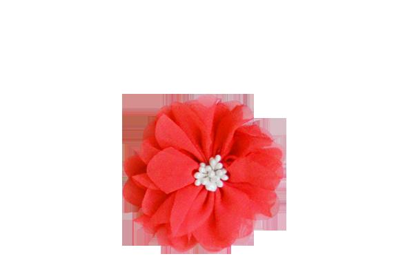 fleur corail