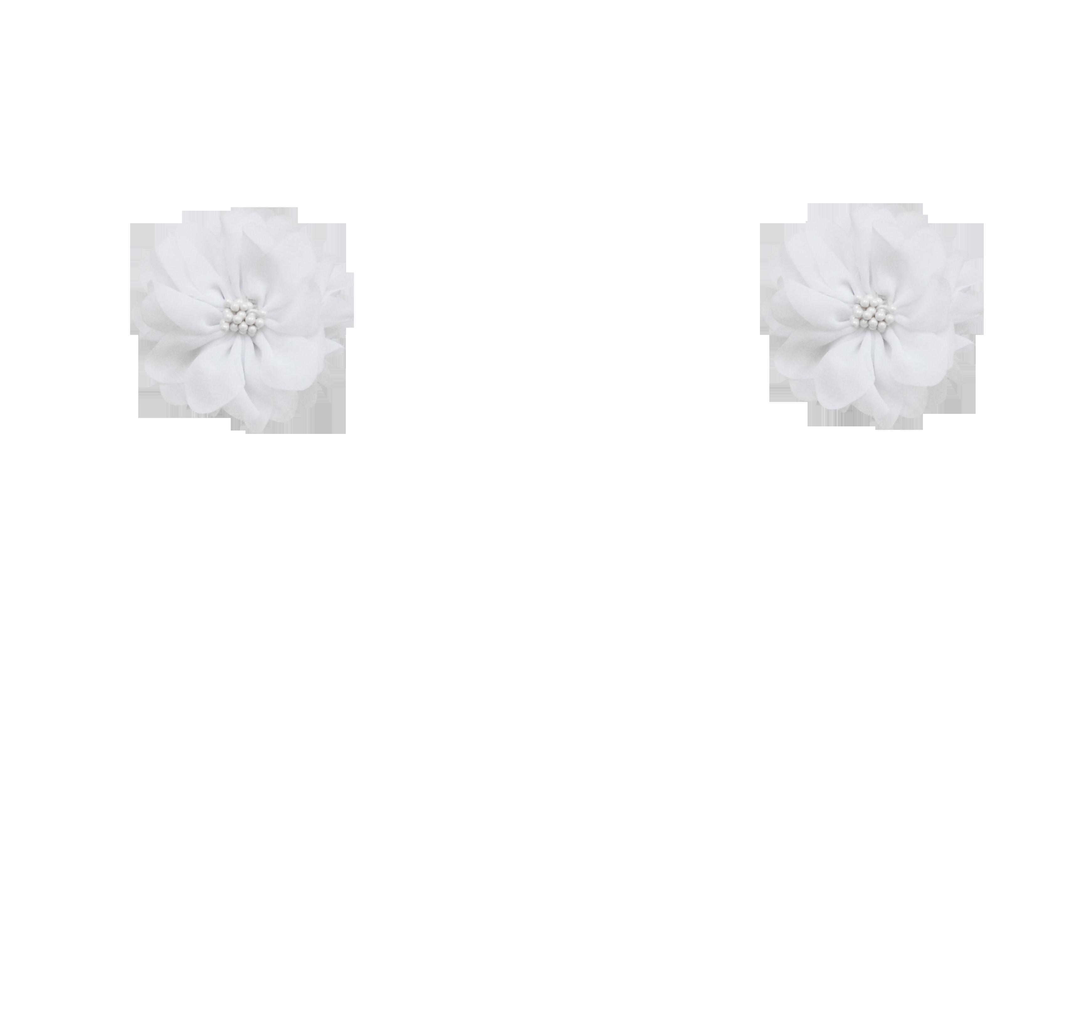 fleurs blanches pistils