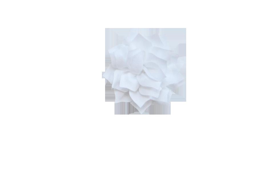 Fleur lotus blanc