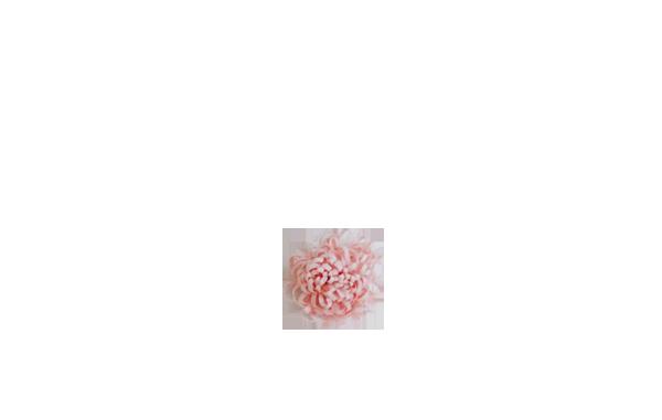 pompon rose poudré