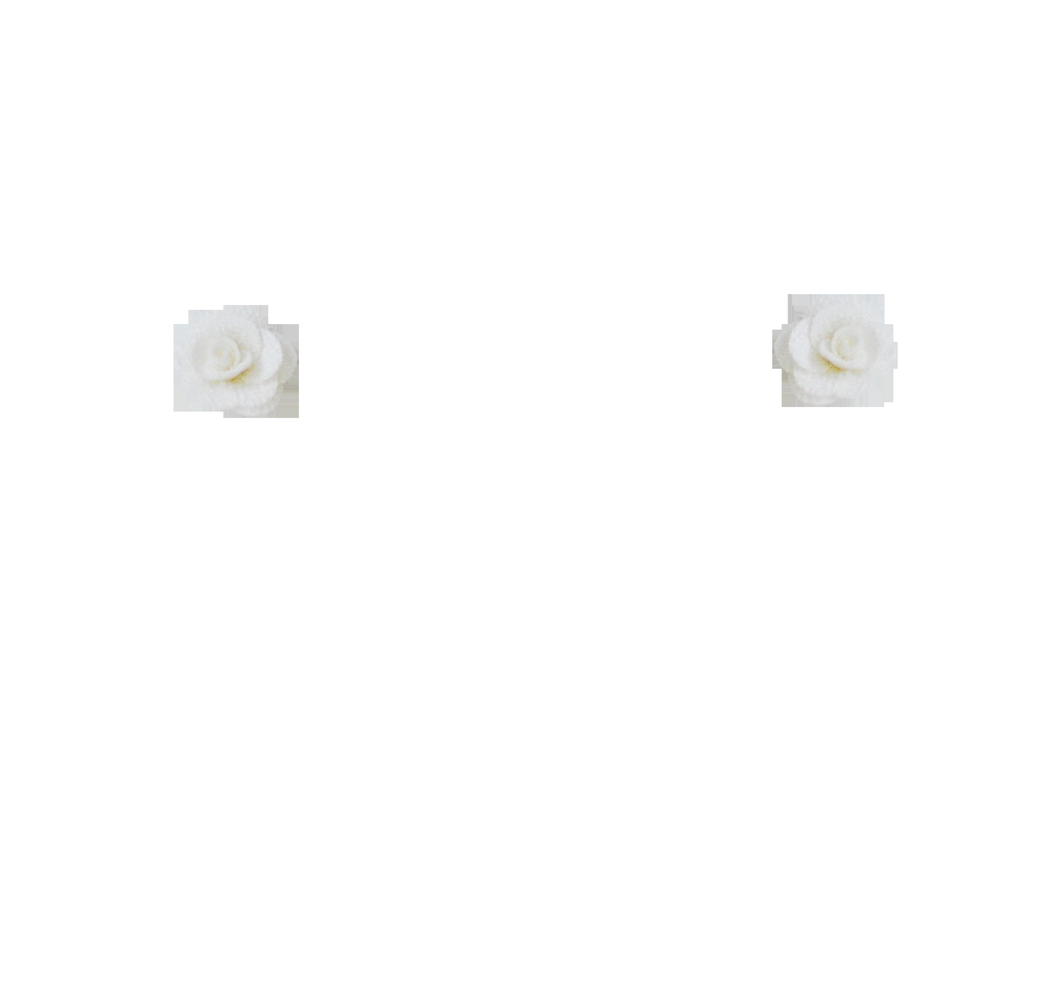 rose ivoire S