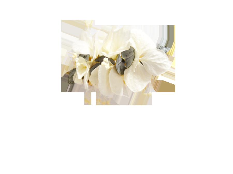 fleurs éternelles et eucalyptus