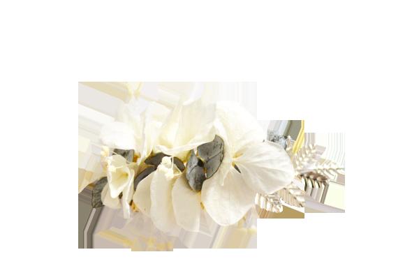 Eucalyptus hortensias ivoire ARGENT