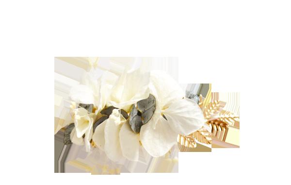 Eucalyptus hortensias ivoire OR