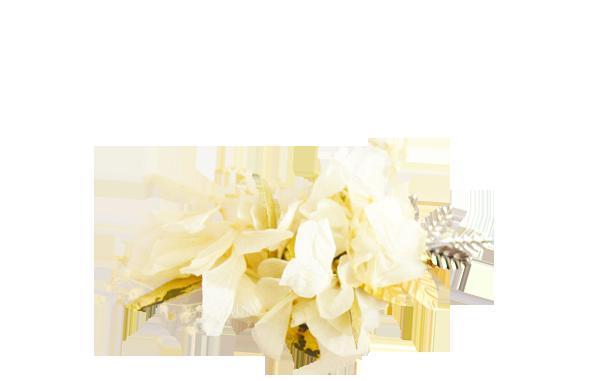 hortensias ivoire et or ARGENT