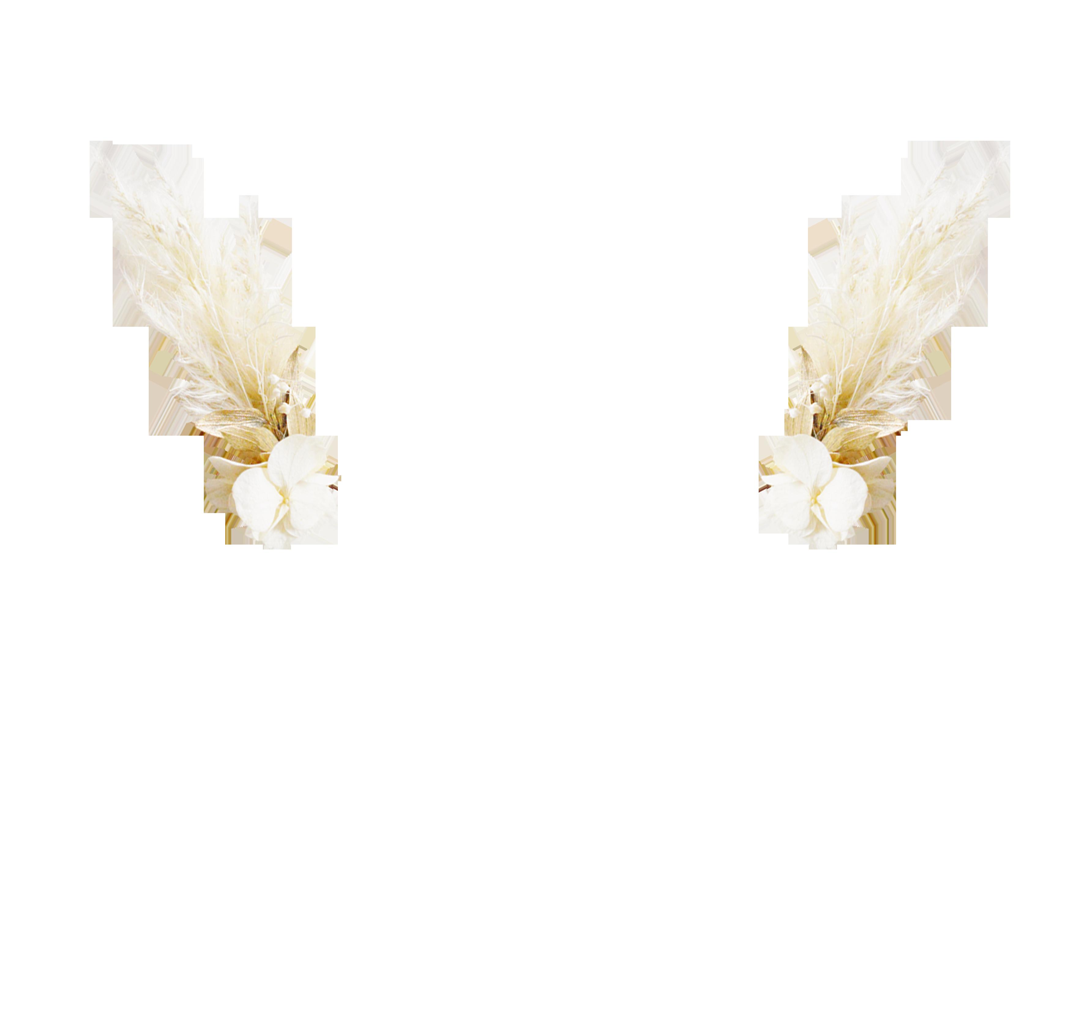 Pampa et hortensia ivoire
