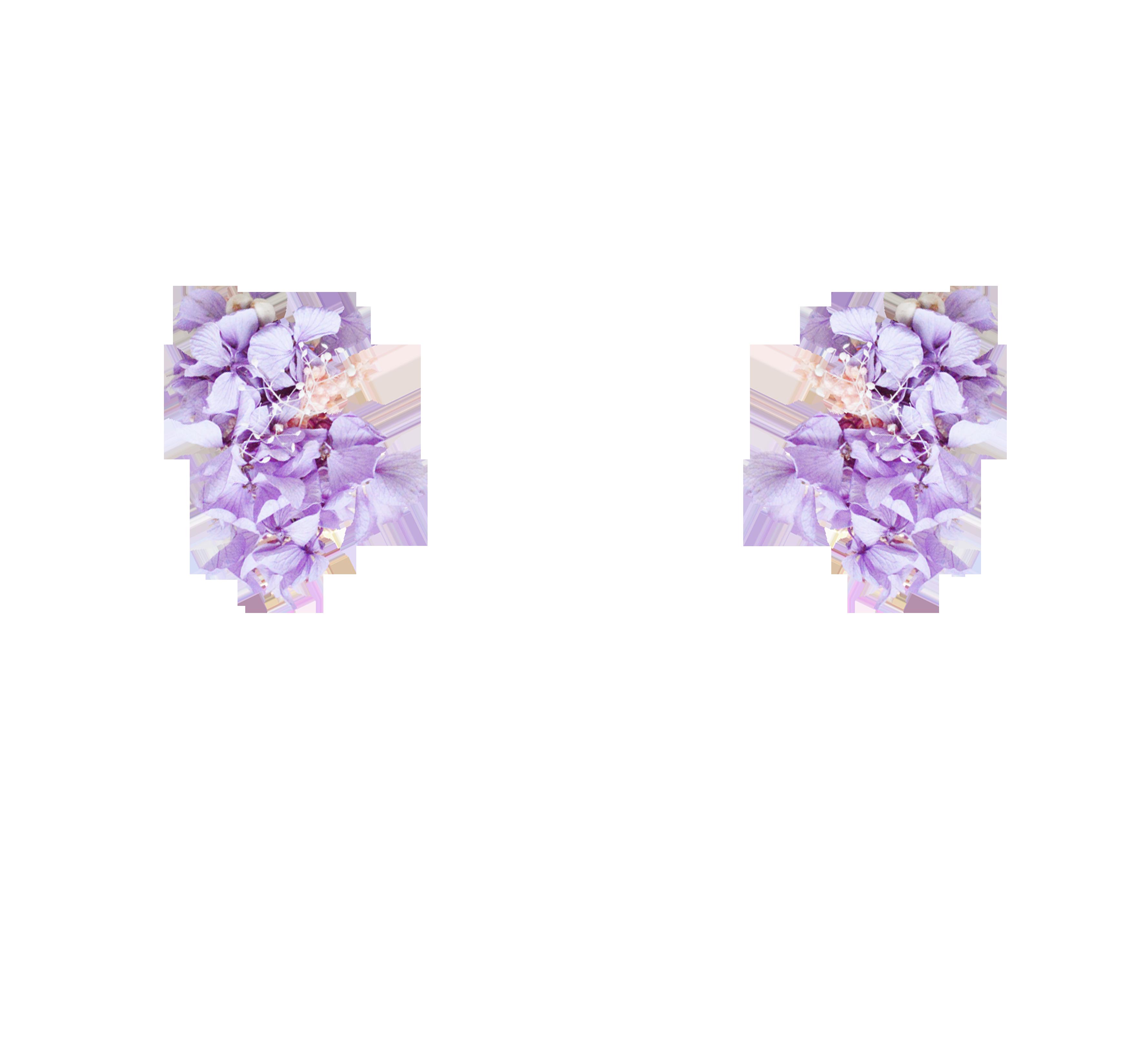 hortensias stabilisées violettes