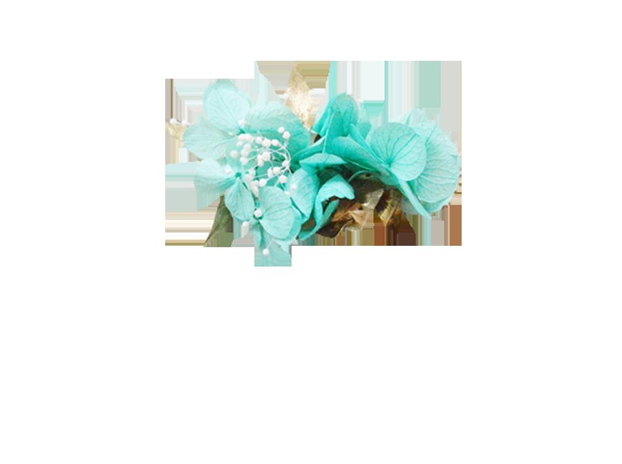 hortensia turquoise à feuillage doré